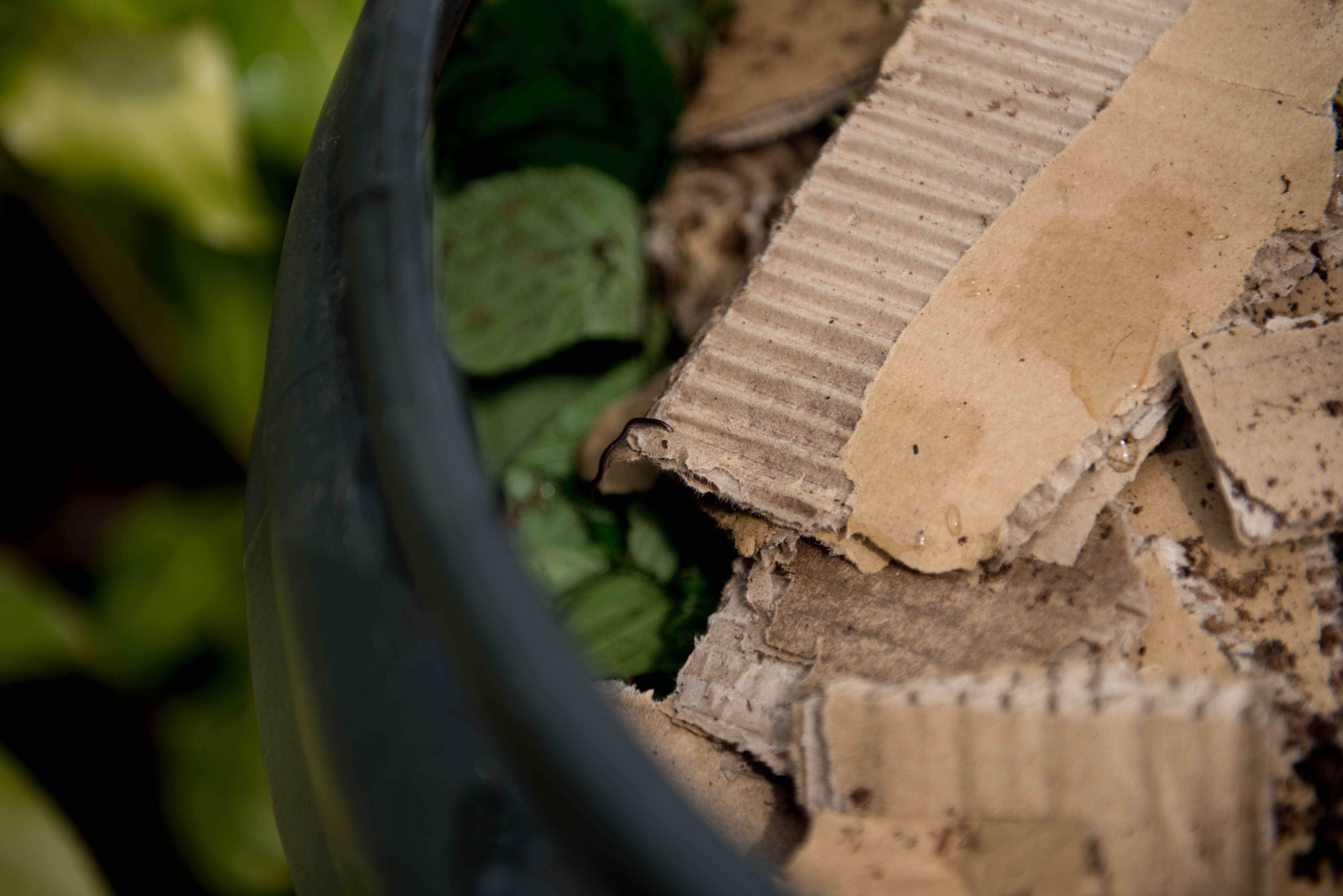 Adding brown, carbon, cardboard to your compost bin for zero-waste gardening