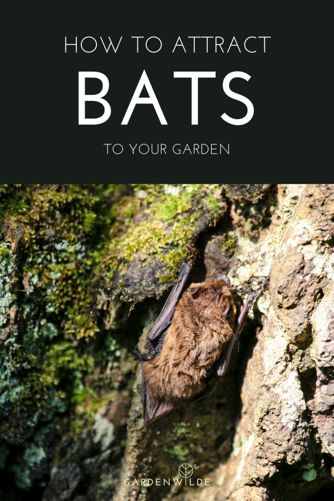 How to attract bats to your garden pinterest pin showing a pipistrelle bat