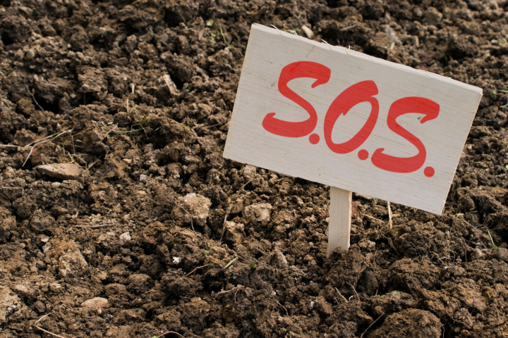 Grappling with Groundcover to Save MySoil