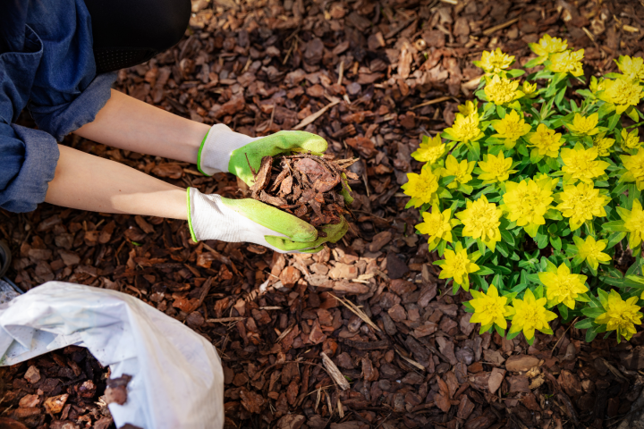 What Is Mulch and Why We Should All BeMulching